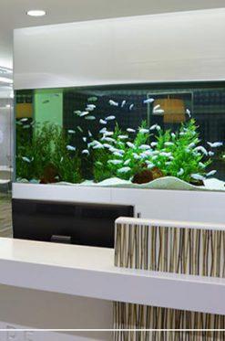 Aquarium in interior decoration design